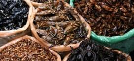 Đi chợ côn trùng Skun Campuchia