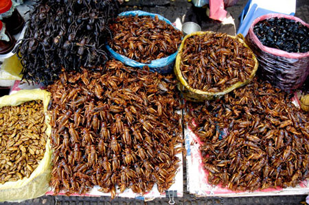 Côn trùng được bày bán đa dạng ở Campuchia