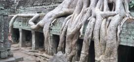 Những bộ rễ cây khổng lồ ở đền Ta Prohm