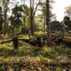 Phát hiện tàn tích của đế chế lớn nhất thế giới ở Campuchia